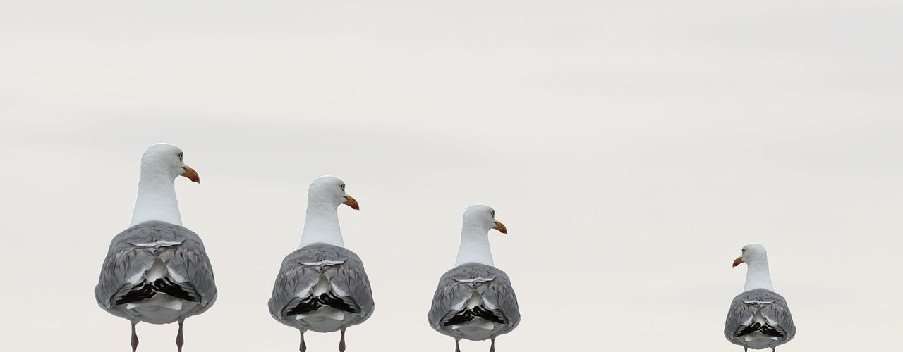 Tre fåglar exkluderar den fjärde.